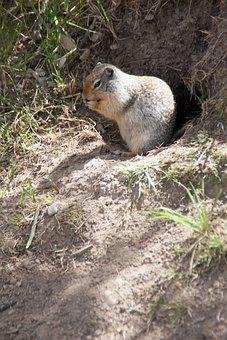 Squirrel, Nature, Animal, Cute, Wildlife, Furry