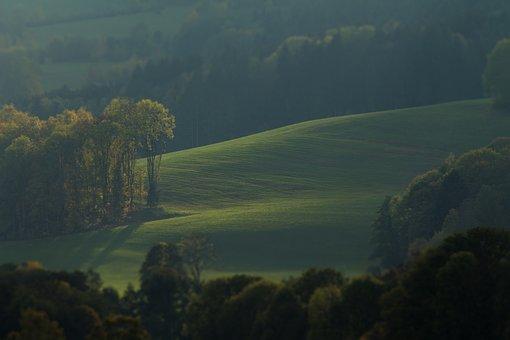Meadow, Trees, Landscape, Nature, Rural, Summer, Autumn