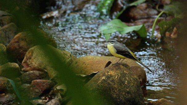 Bird, Avian, Sitting, Stream, Rock, Forest, Ground
