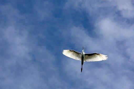 Bird, Flying, Nature, Wing, Animal World, Animals