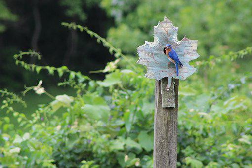 Bluebird, Summer, Nature, Bird, Perched