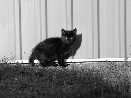 Black Cat, Garden, Black And White, Kitten, Black, Cat