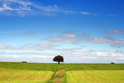 Landscape, Tree, Field, Nature, Clouds, Fantasy, Sky