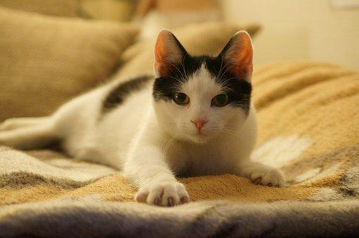 Cat, Kitten, Animal, Playful, Cute, Pet, Curious