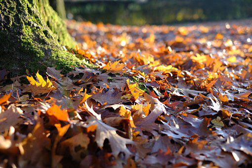 Tree, Tribe, Leaves, Autumn, Fall Color