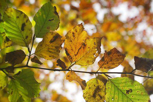 Autumn, Leaf, Forest, Nature, Fall, Tree, Colorful