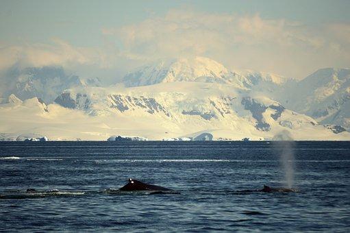 Antarctica, Whales, Landscape, Tursimo, Fin, Polo, Ice