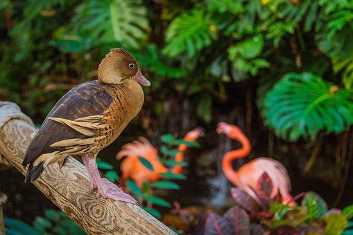 Duck, Flamingo, Flamingos, Tropical, Plants, Watching
