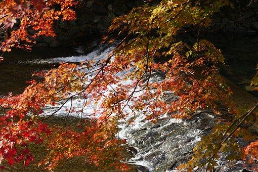 Kyoto, Foliage, Autumn Color, River, Maple