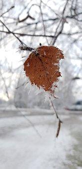 Leaf, Frost, Winter