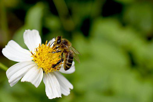 Bee, Garden, Flower, Plant, Insects, Flowers, Honey