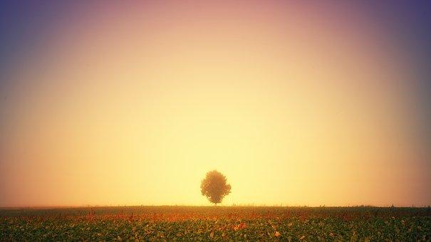 Light, Glow, Tree, Meadow, Autumn, Sun, Glowing, Hell