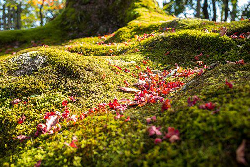 Tree, Forest, Green, Moss, Macro, Close Up, Nature