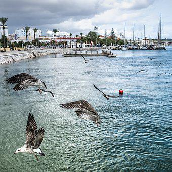 Gulls, Port, Portugal, Portimão, Sea, Bird, Water