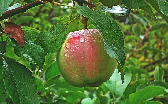 Apple, Fruit, Vitamins, Health, Delicious, Food