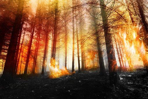 Forest, Fire, Wood, Hot, Smoke, Heat, Trees, Orange