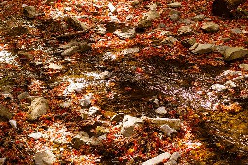 Natural, Landscape, Autumnal Leaves, Autumn, River