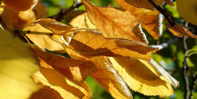 Autumn, Leaf, Nature, Leaves, Fall Color, October, Mood
