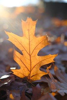 Leaf, Leaves, Autumn, Fall Color, Nature