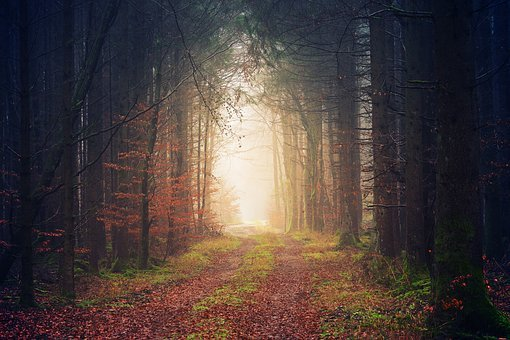 Forest, Away, Darkness, Light, Nature, Trees, Avenue