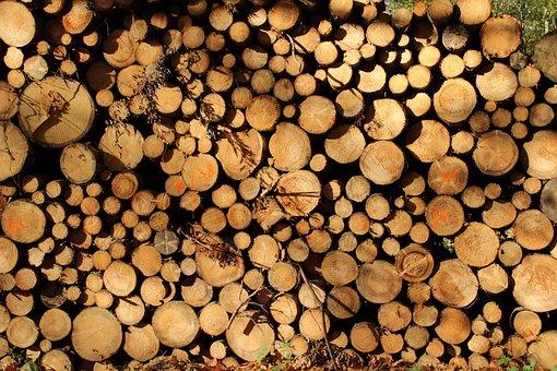 Wood, Tree, Forest, Tribe, Log, Landscape, Old, Nature