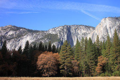 Yosemite, National Park, Wood, Landscape, Nature