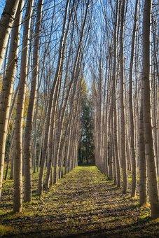 Arboleda, Trunks, Forest, Nature, Bark, Light, Leaves