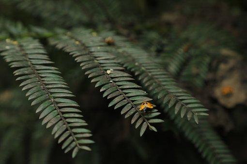 Green, Nature, Ladybug, Animal, Forest, Texture