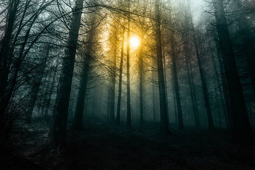 Forest, Morning, Fog, Nature, Trees, Tree, Wood, Mist