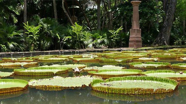 Pamplemousse Garden, Botanical Garden, Mauritius, Plant