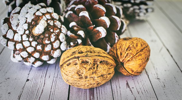 Walnut, Shell, Structure, Pine Cones, Nut, Brown