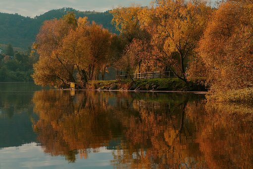 Autumn, Reflection, Projection, Color, Warm, Tree, Leaf