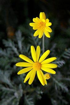 Yellow Flower, Nature, Republic Of Korea, Yellow