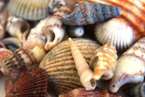 Shells, Animals, Holiday, Sea, Memory