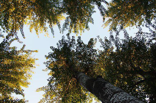 Shade, Sky, The Number Of, Background, The Leaves, Tree