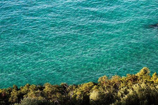 Blue, Marine, Tree, Nature, Water, Turquoise, Ocean