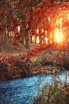 Bach, Forest, Trees, Landscape, Sunset, Shrubs, Waters