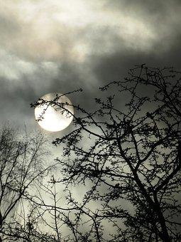 Clouds, Sun, Nature, Trees, Weather, Sky
