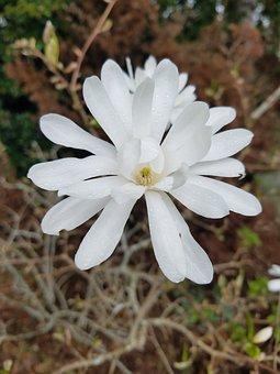 Flower, White Flower, Life, White, Nature, Flora