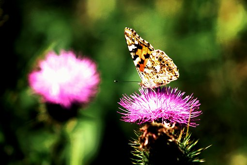 Butterfly, Butterflies, Wings, Colourful, Nature
