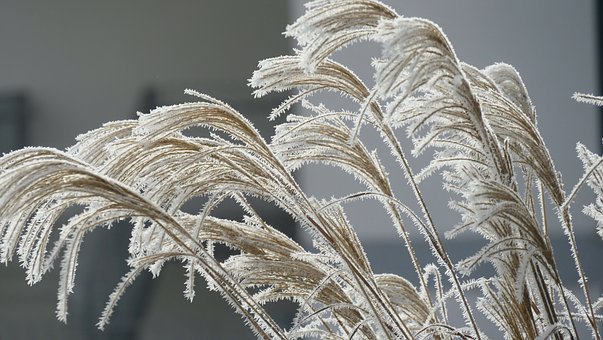 Winter, Dew, Ripe, Atmosphere, Mood, Cold, Grasses