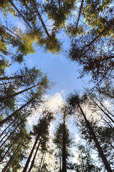 Woods, Trees, Sky, Forest, Nature, Landscape, Tree