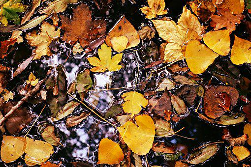 Autumn Leaf, Fallen Leaves, Puddle, Water, Yellow