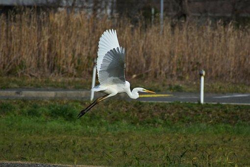 Animal, Road, Promenade, Bird, Wild Birds, Heron, Egret