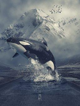 Manipulation, Animal, Killer Whale, Orca, Mountains
