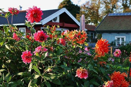 Flowers, Garden, Colorful Gardens, Autumn