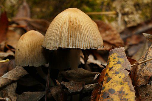 Wild Mushrooms, Forest, Nature, Autumn, Leaf