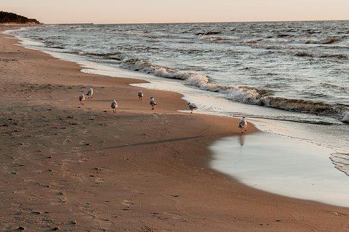 Sea, Beach, Holidays, Water, Landscape, Summer