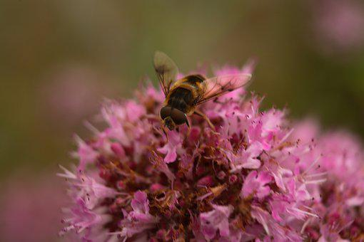 Bee, Pollen, Flower, Bloom, Insect, Nectar, Blossom