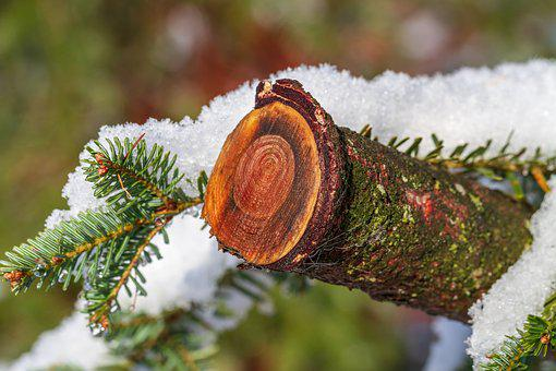Wood, Snow, Winter, Forest, Log, Wet, Branch, Nature
